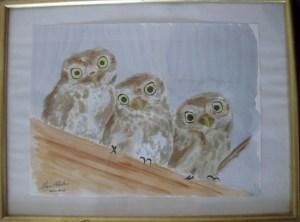 trois chouettes en aquarelle