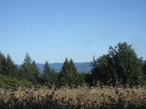 Mont Gargan 1