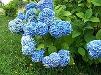 200px-Flower_658